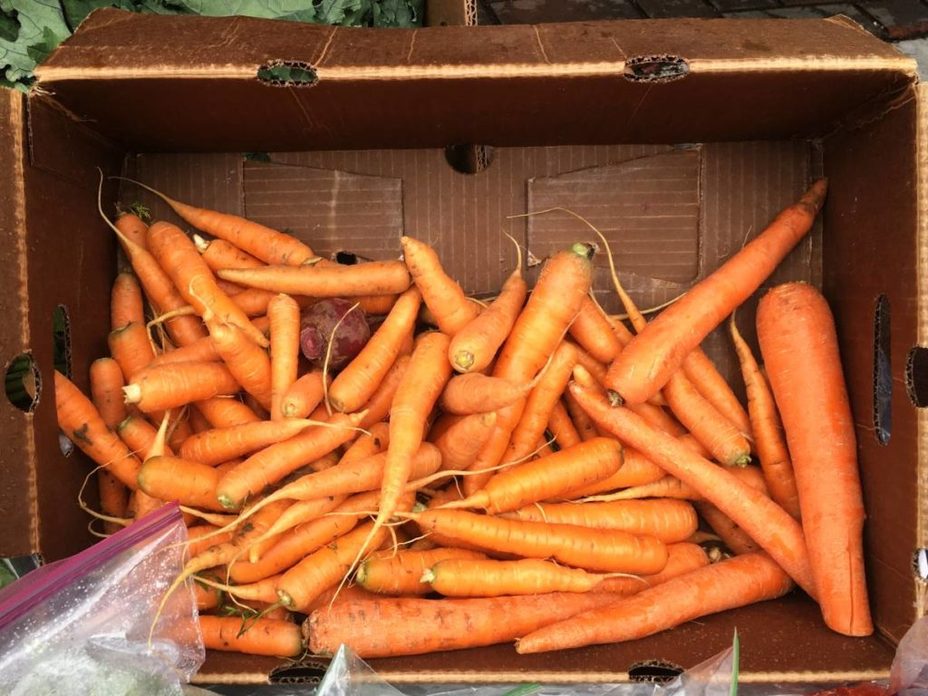 A crate of carrots on display at the No Cop Co-Op in the Capitol Hill Autonomous Zone.